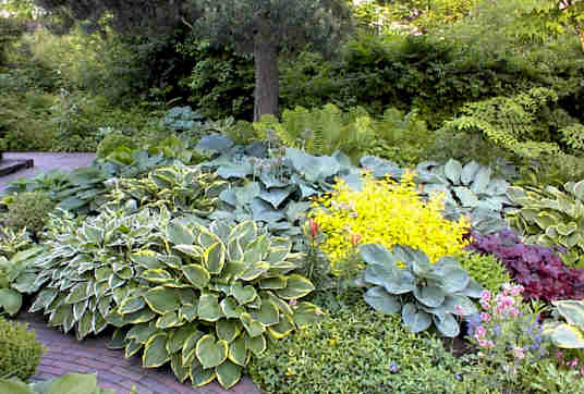 hosta garden design on Susan S Garden